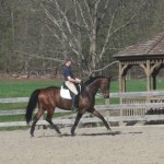 Cricket Hill schooling ring, Delilah